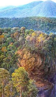 Pinturas Realistas de Arboles al Oleo