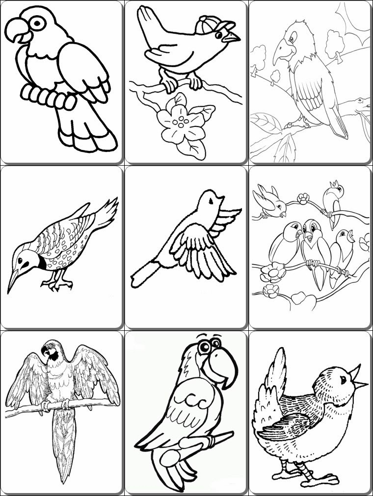Birds Coloring Pages PDF Pdf Coloring Pages