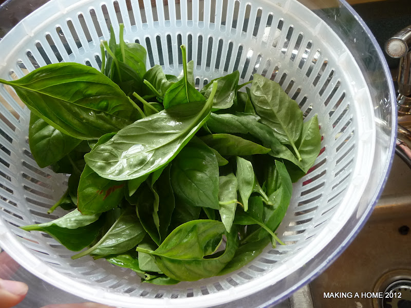 how to keep fresh basil paper towel