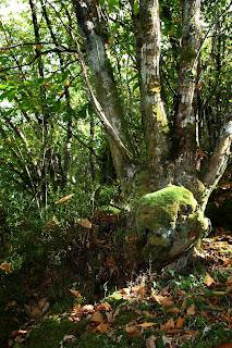 Bosque del regueiro de los Molinos