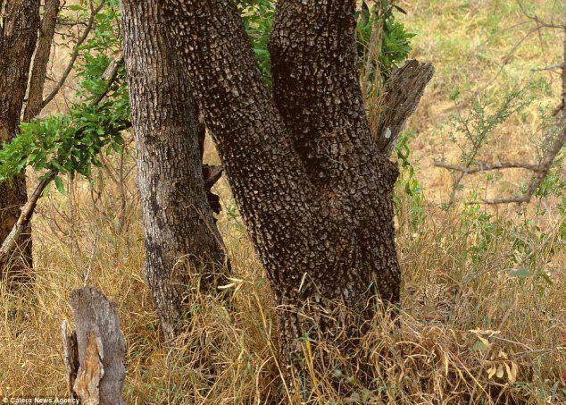 Spot the leopard jjbjorkman.blogspot.com