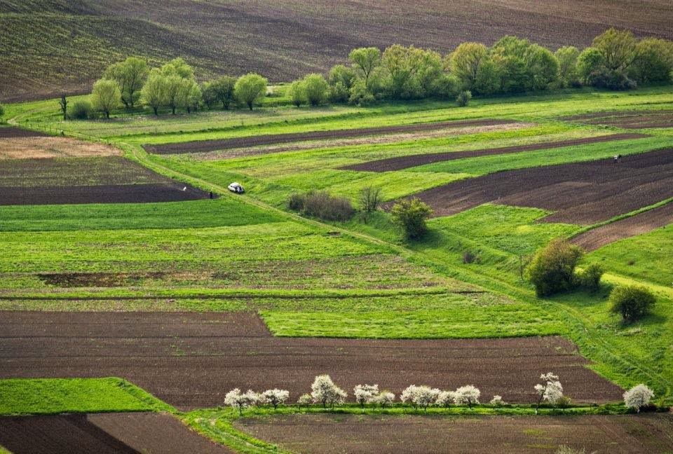 Spring on the West of Ukraine