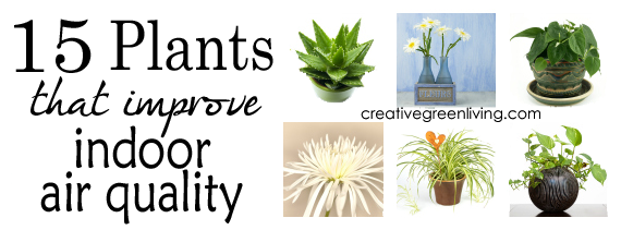 15 plants that improve indoor air quality creative green for Indoor plants for better air quality