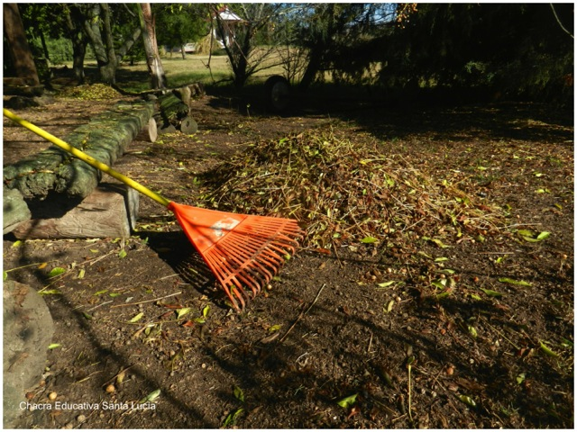 Rastrillando hojas secas - Chacra Educativa Santa Lucía