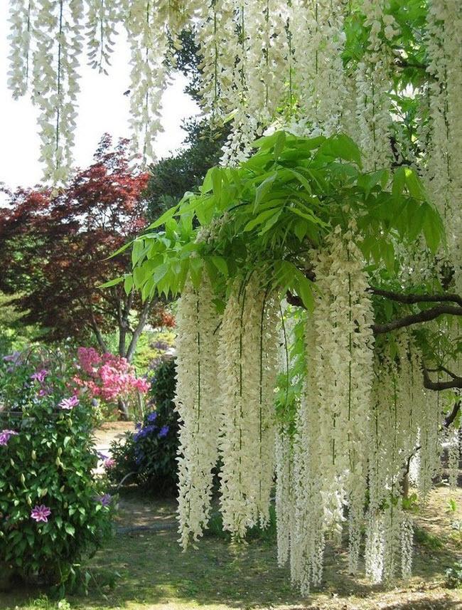 شلالات الزهور اليابانية Water_Fall_Flowers_Japan_1.jpg