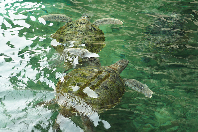 5 Great Reasons to Visit Mexico's Riviera Maya - Centro Ecologico Akumal