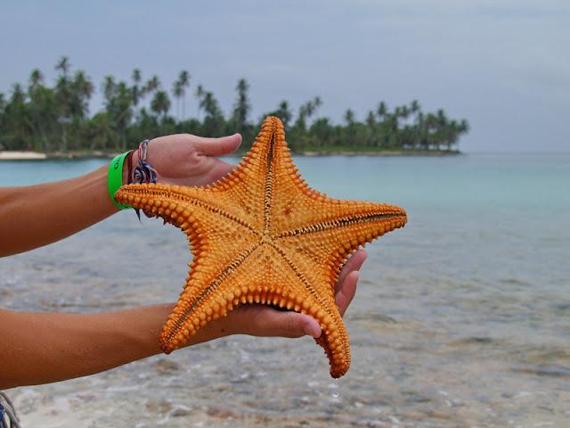 La Chachipedia: Las estrellas de mar