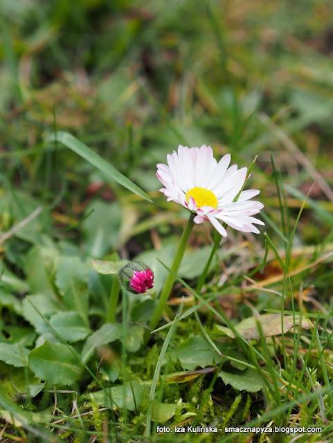 kwiatki , wiosna , kwiatek , kwiaty jadalne , zarośla łęgowe , spacer , wycieczka ,