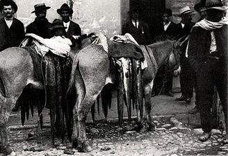 Venta de congrio en burros