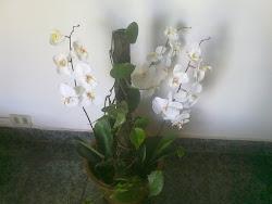 Flores de la BoticA