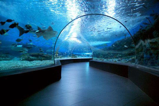 Manila Ocean Park : wow ocean park oceanarium entrance fee philippines manila ocean park ...