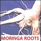 MORINGA ROOTS