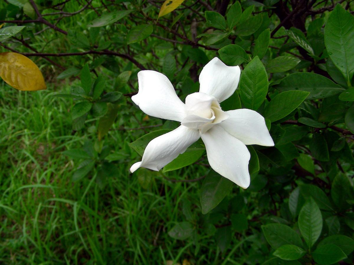 About Bangladesh Flowers Of Bangladesh