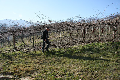 Saluzzo 2008, With Kiwi Vines