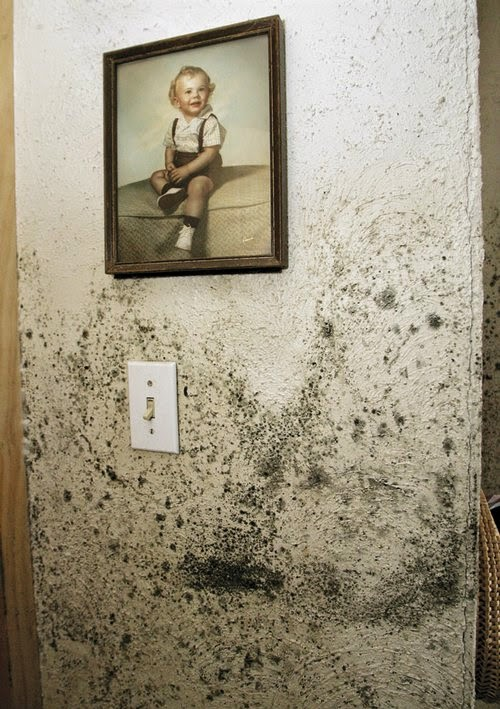 how to remove mold stains from walls - How To Remove Stains From Walls