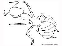 Mewarnai Gambar Semut, Serangga Darat Tak Bersayap