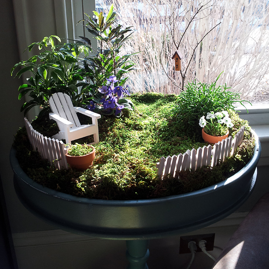 Indoor fairy garden.