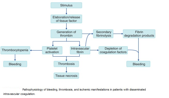 osteomyelitis etiology pathogenesis differential diagnosis and treatment biology essay Diagnosis of clinically suspected cases is supported via laboratory tests, biopsy,  and/or imaging the treatment of choice for hematogenous osteomyelitis is iv.