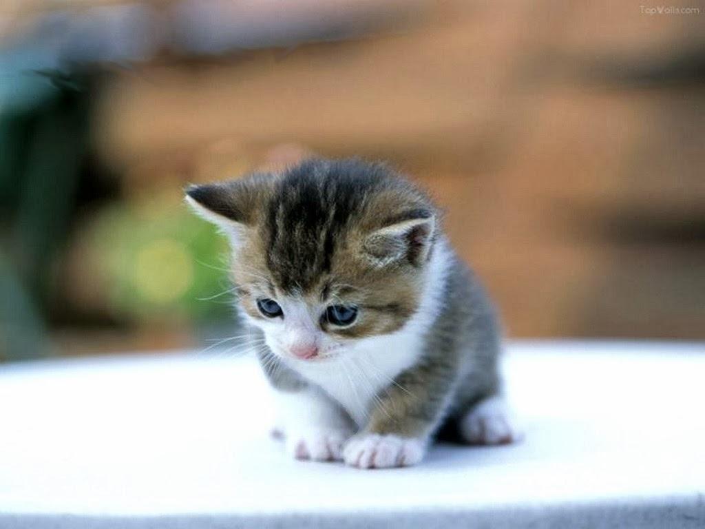 Resultado de imagen de gatos desde su nacimiento