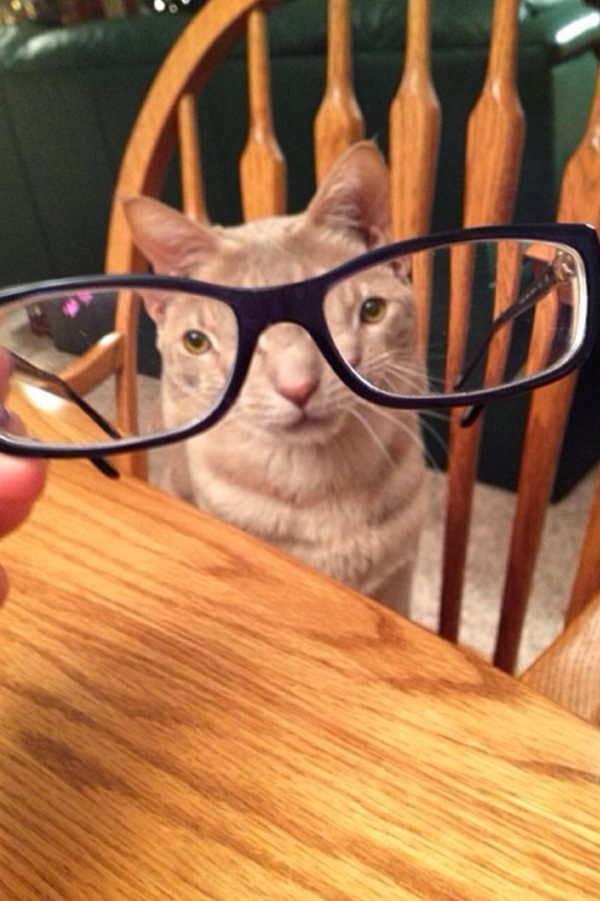 Funny cats - part 81 (40 pics + 10 gifs), cat pics, cat wears glasses