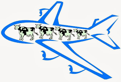 my really rubbish image of a plane full of cows