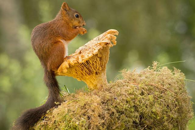 Esquilos emprestam seu charme a um estúdio montado na natureza por Geert Weggen