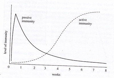 difference between active and passive immunity pdf
