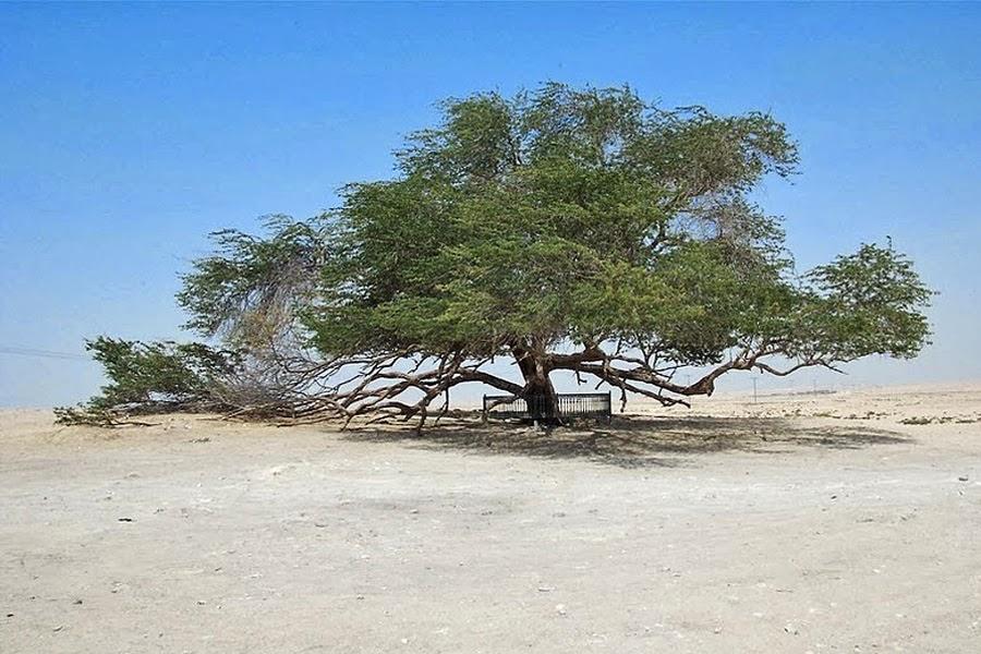 viagem-ferias-arabia-saudita-qatar