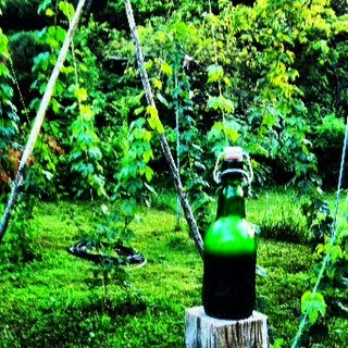 Backyard Hops