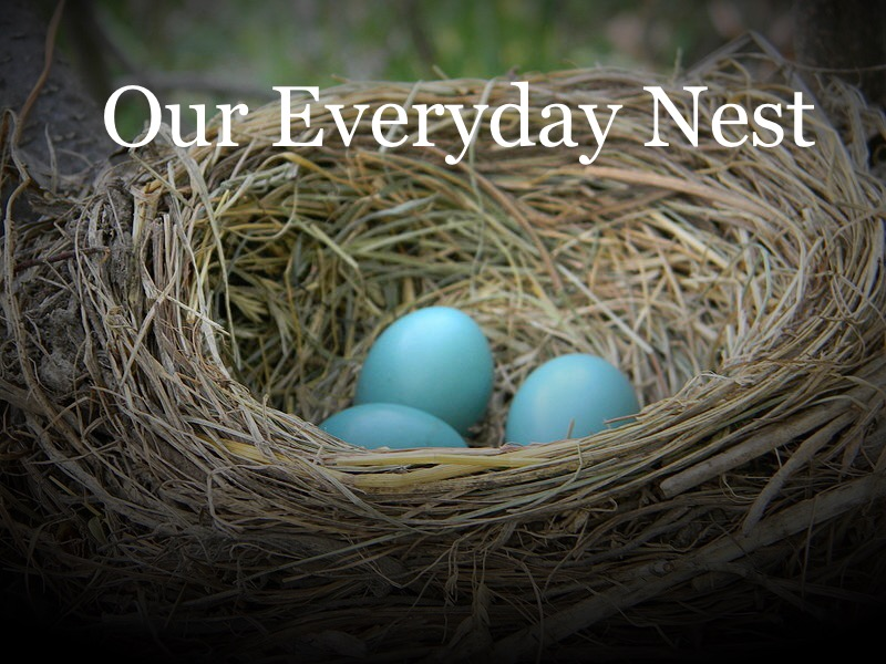 Our Everyday Nest