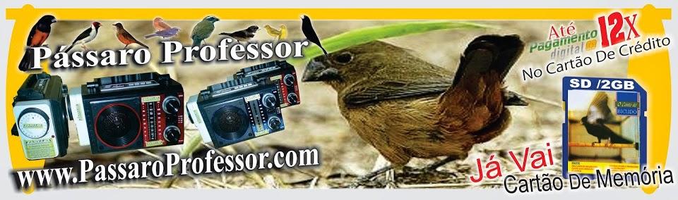 pássaro eletronoco