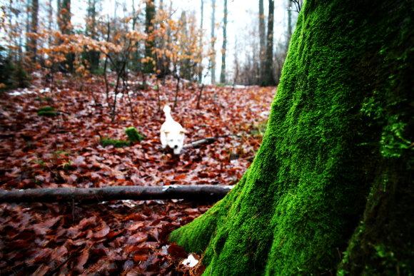Waldspaziergang um DIY Material zu finden