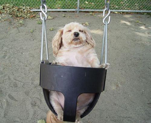 Fotos muy graciosas de perros