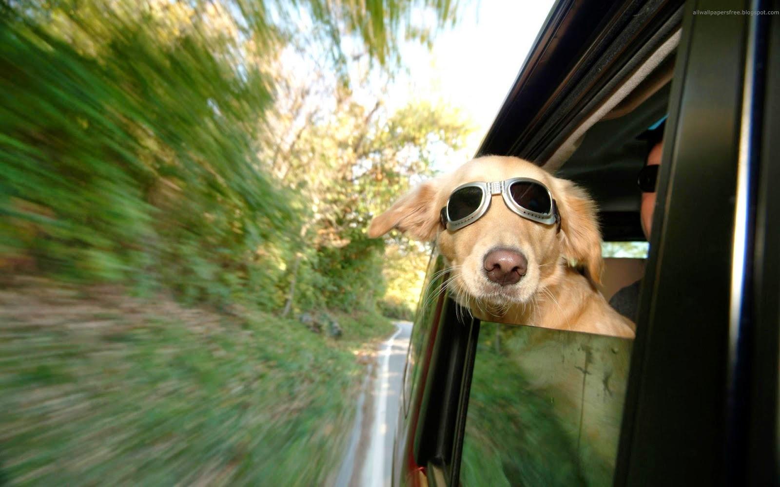 Fotos Divertidas de Perros, parte 1