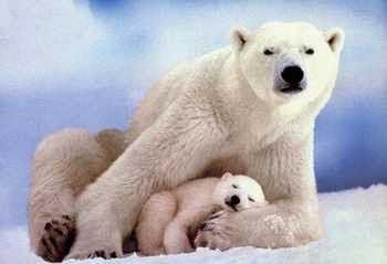 Los osos en los sueños