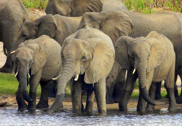 afrikafotos downloaden oder kaufen elefanten aus namibia. Black Bedroom Furniture Sets. Home Design Ideas