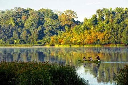 Thưởng ngoạn những khu rừng đẹp nhất Việt Nam1