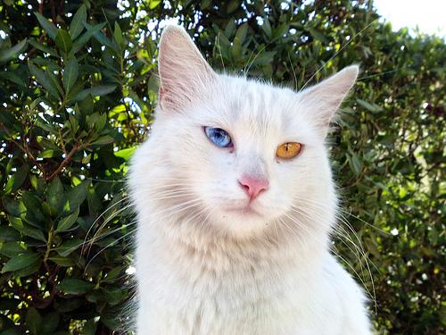 A Cat In Every Place Listanbul Dei Gatti