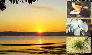 taman wisata alam bancea