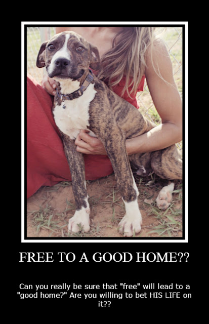 Craislist Free Cat To Loving Home