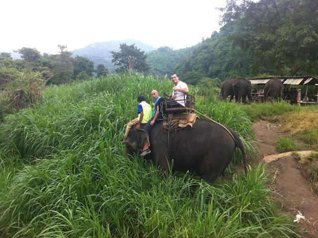 El elefante como cada tres pasos