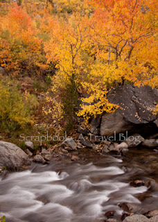 Fall Colors at Eastern Sierras Bishop