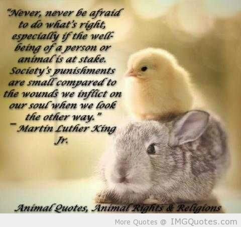 Animal Love: The Animal Quotes