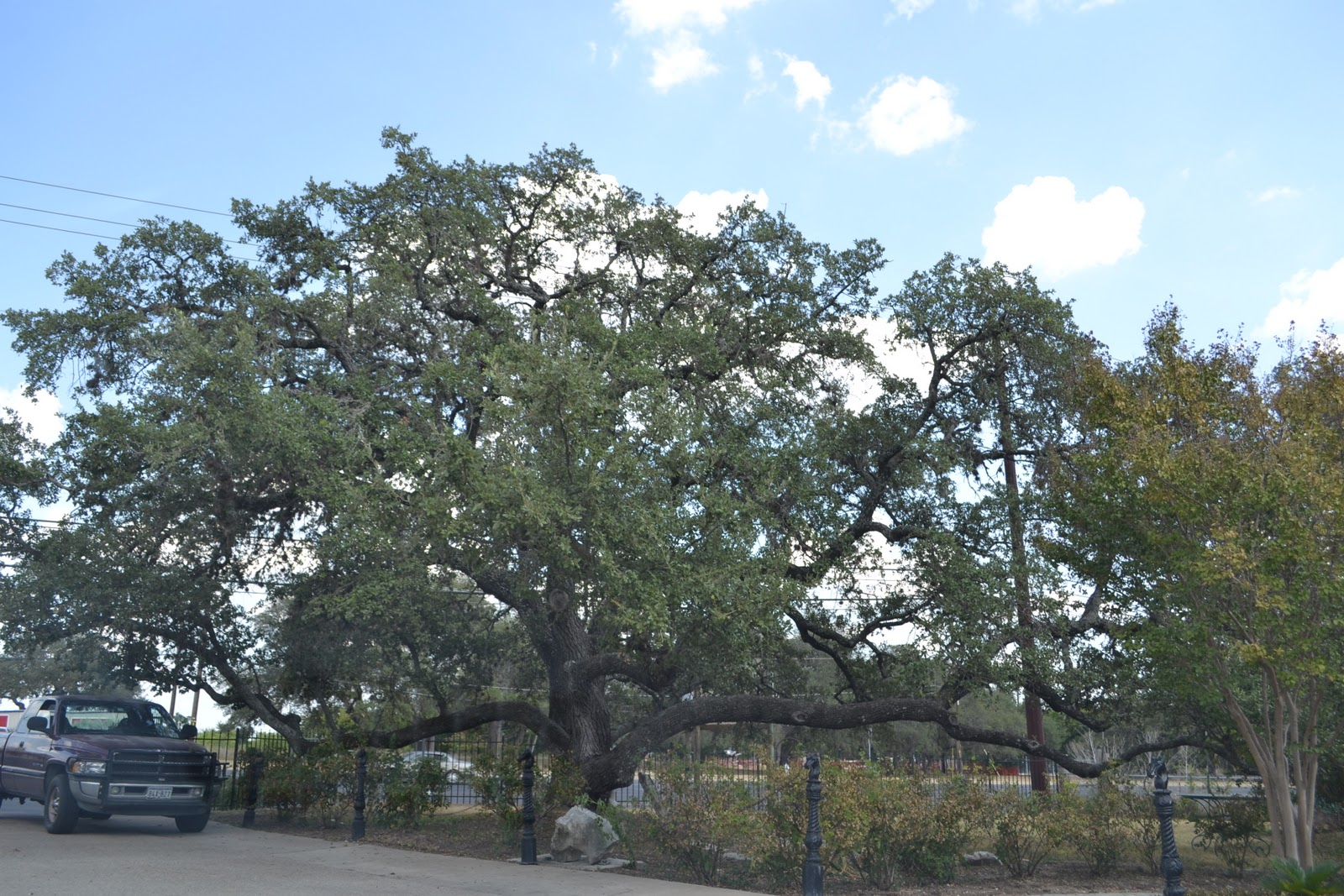 Oak folklore which enables the reader to see the reasoning behind the perspective of the oak tree being seen as a pathway to higher spiritual knowledge biocorpaavc
