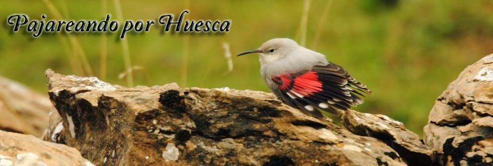 Pajareando por Huesca