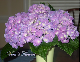 Lovely hydrangea this summer