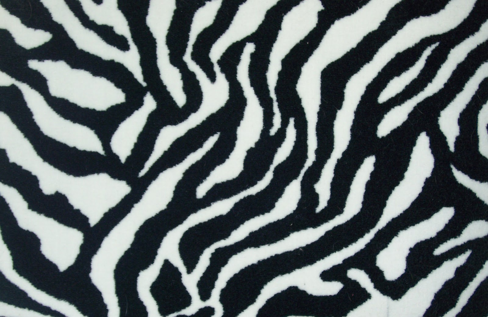 Zebra Print Funny Animals