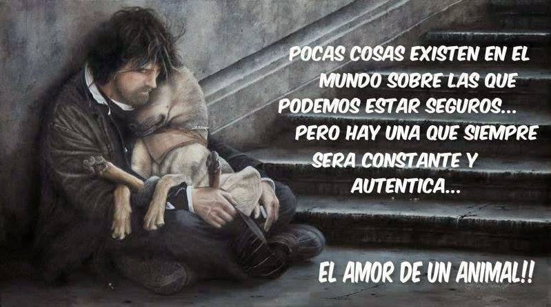 El Amor De Un Animal