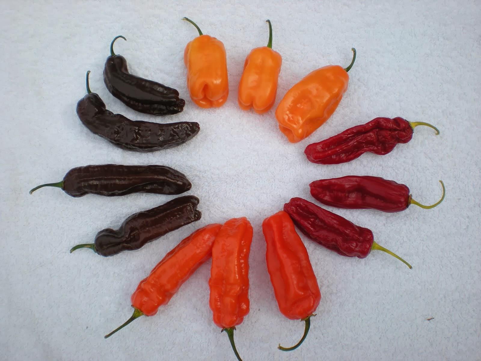 Peruana multi-colore