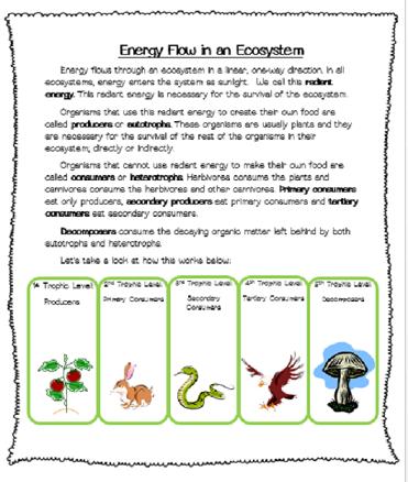 teaching photosynthesis